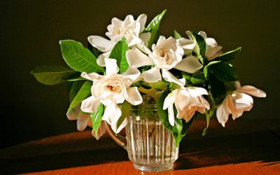 White Candles, Scent of Gardenia An Excellent Shabby Chic Decor Choice