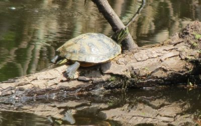 Expecting fish, but turtles show up